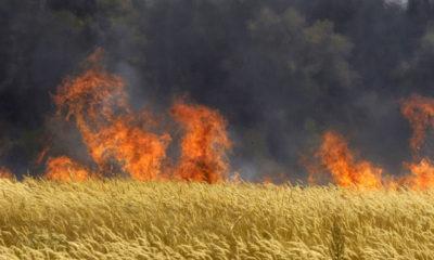 burning-wheat