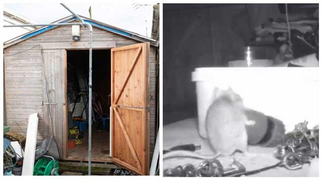 Пенсионер-заловил-мишка-която-подреждала-в-гаража-му