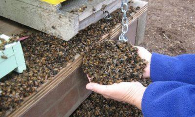 пчелите8664e6018fb043f688e51035d2f8290f